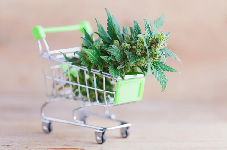 Close up of a miniature shopping cart holding marijuana leaves